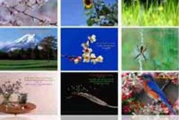 عکس های با کیفیت مخصوص دسکتاپ (3)